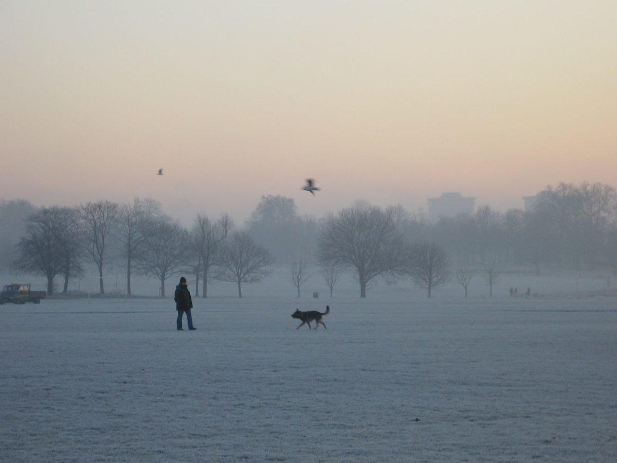 woodward-regents-park-frost1.jpg